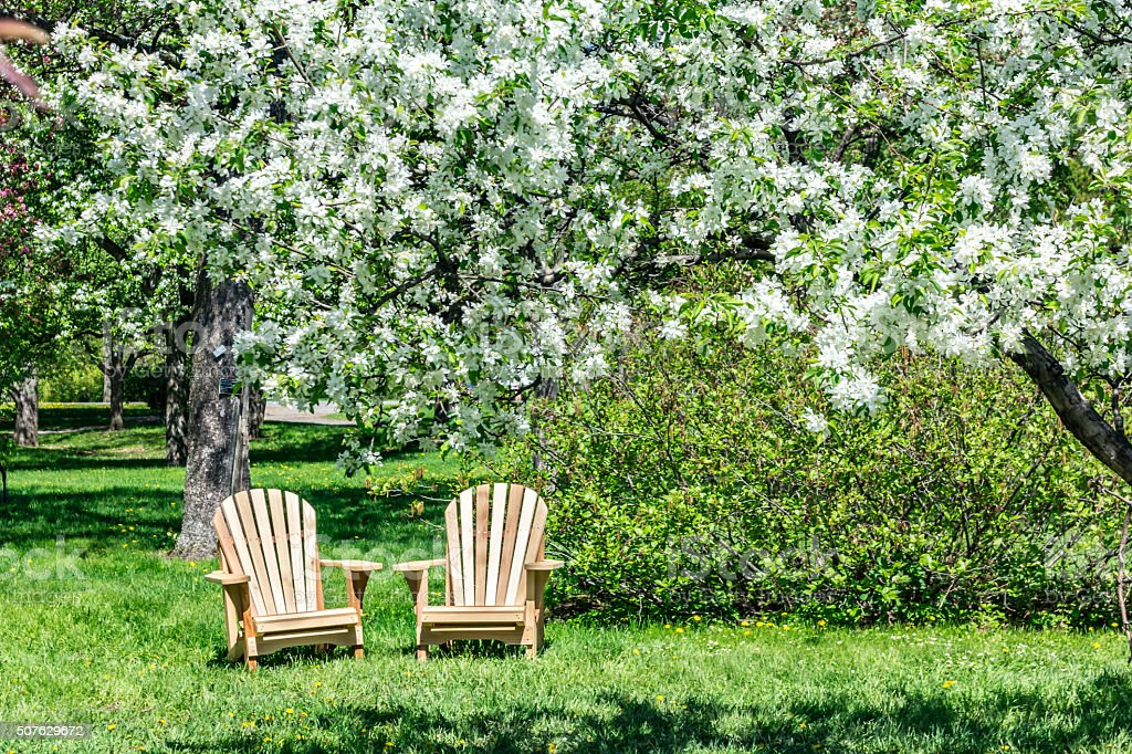 White blossoming apple tree stock photo