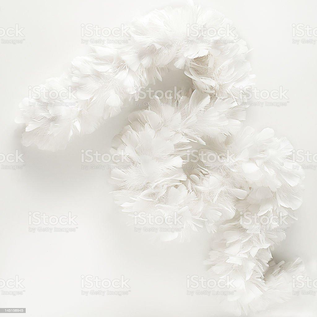 White Boa royalty-free stock photo