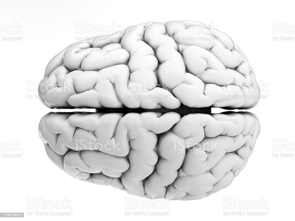 White brain stock photo