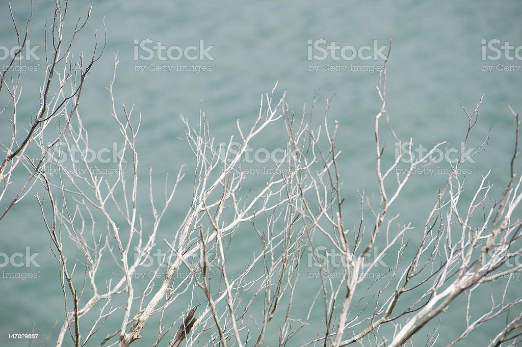 White Branches stock photo