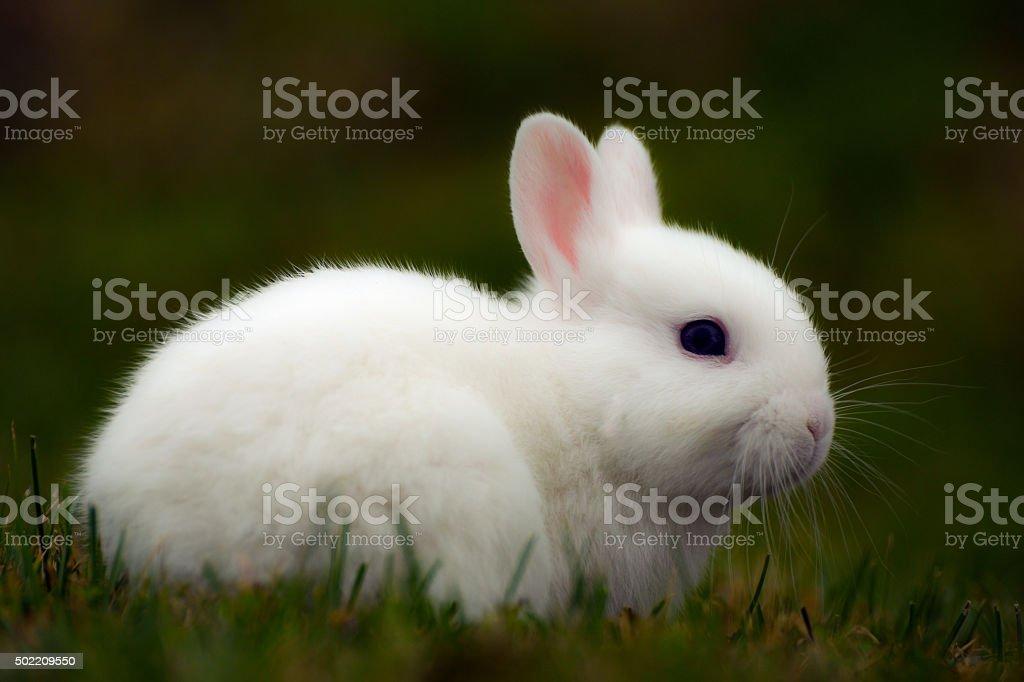 white bunny in grass stock photo