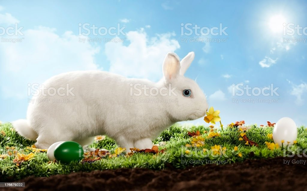 white bunny with flowers royalty-free stock photo