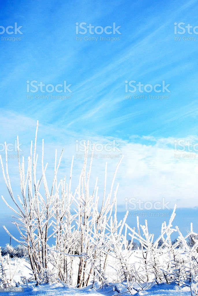 White bushes stock photo