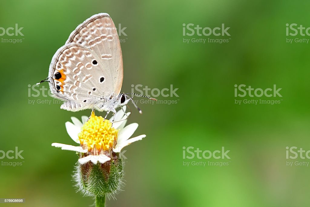 White butterfly with green background stock photo