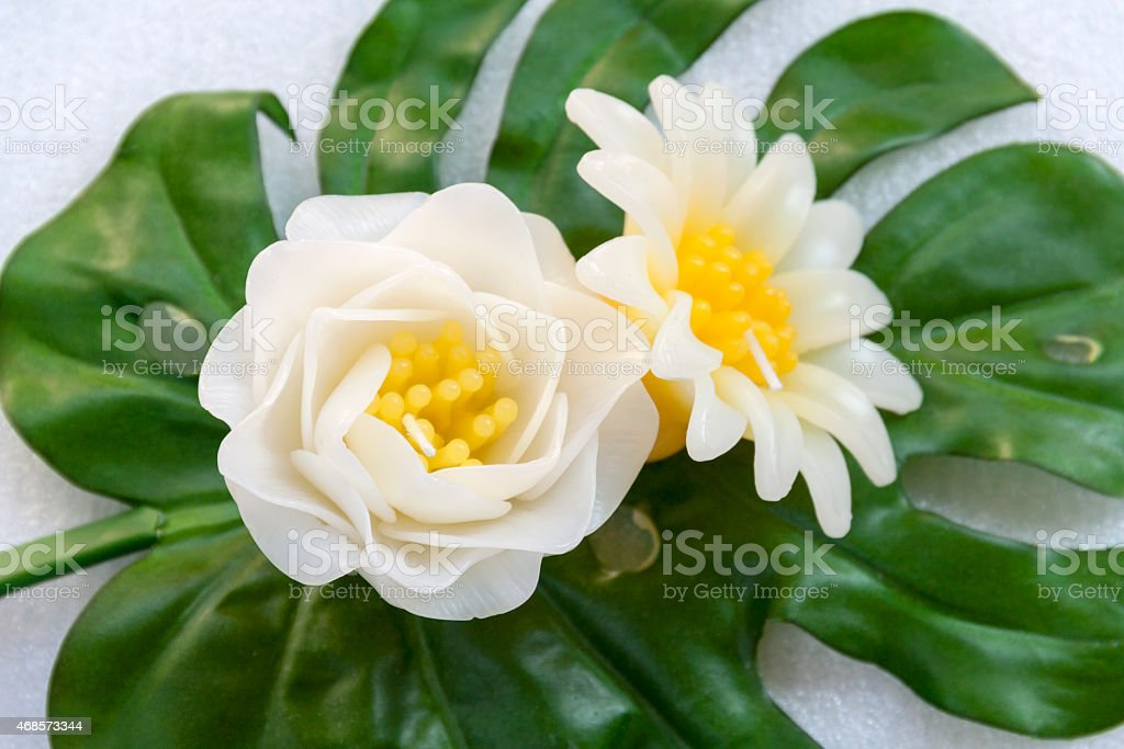 White candle flower royalty-free stock photo
