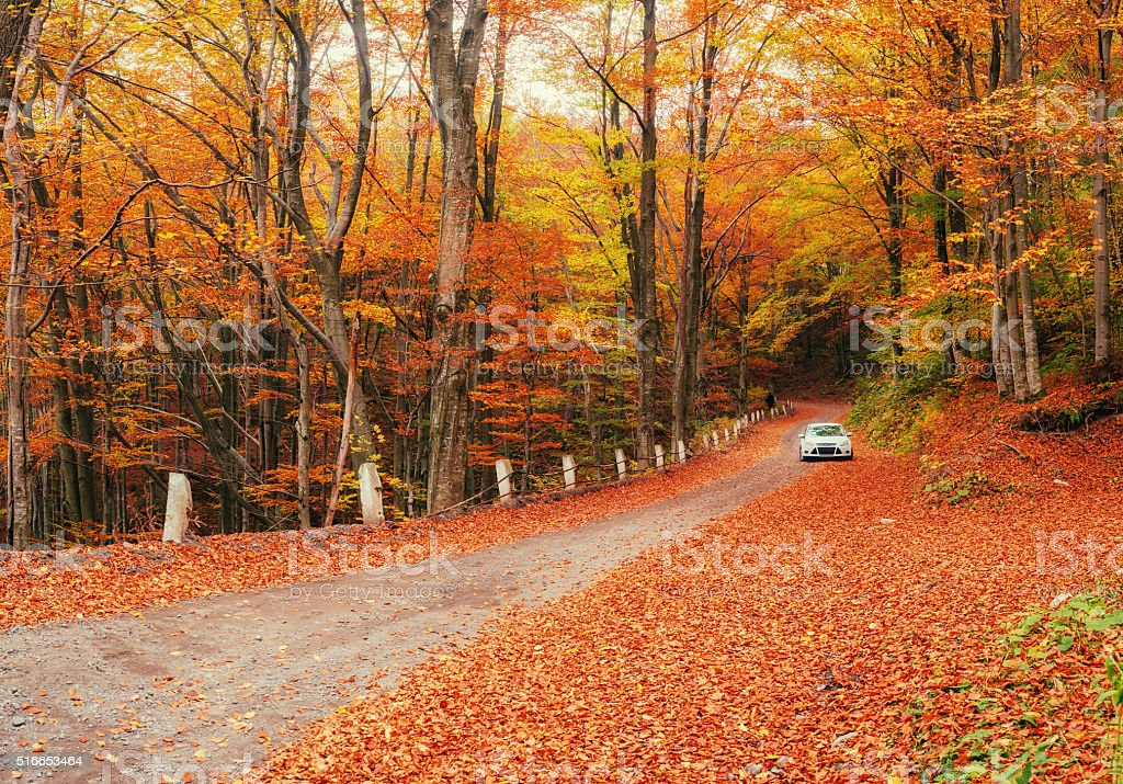White car on a forest trail. Golden autumn. stock photo