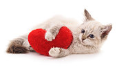 White cat and red heart.