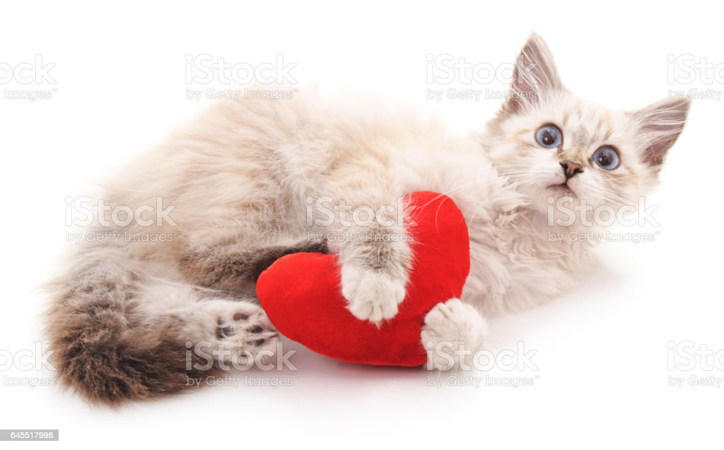 White cat and red heart. stock photo