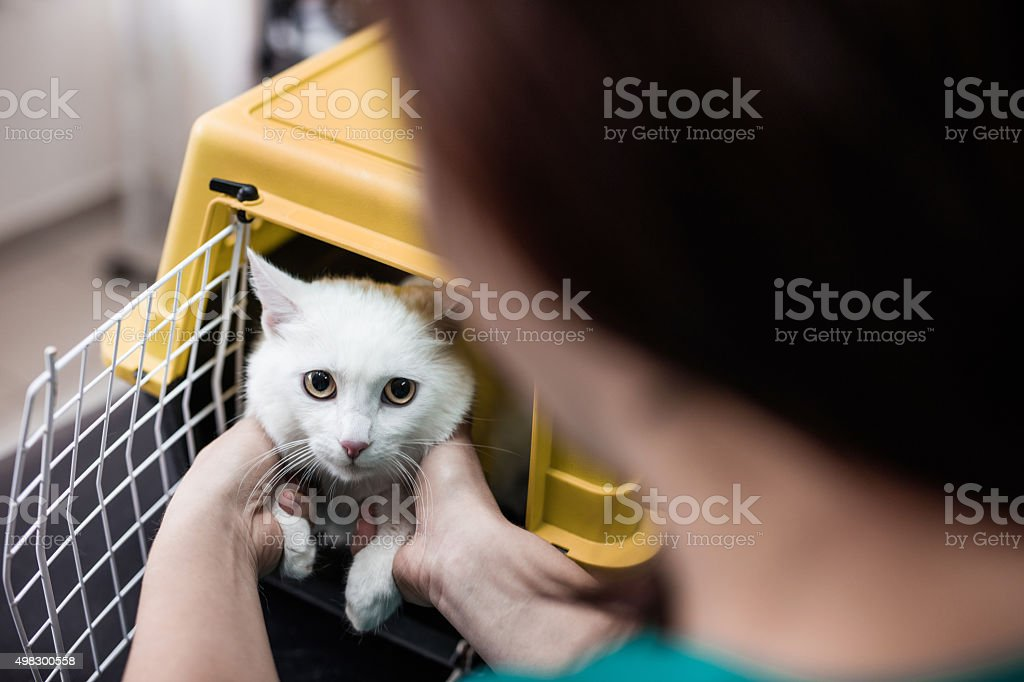 White cat in a cage at vet's office. stock photo