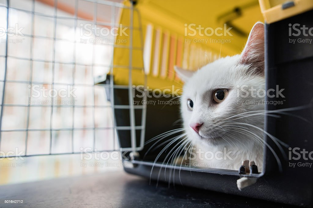 Close up of a white cat in a cage.