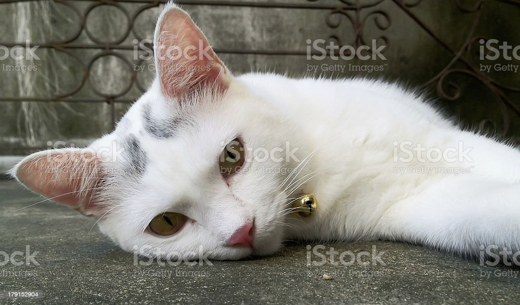 Белая кошка kitten, спать и смотреть Стоковые фото Стоковая фотография