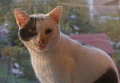 White cat looking through a mosquito net