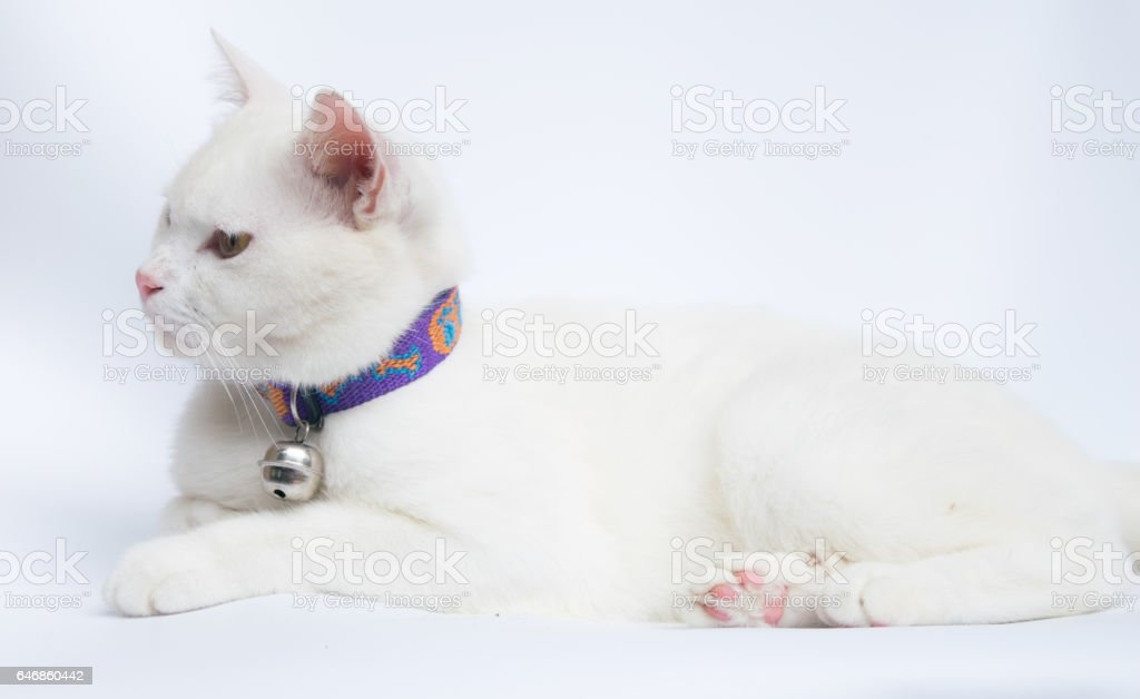white cat on white background stock photo