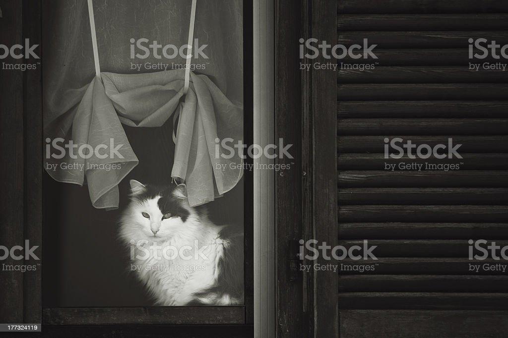 white cat stock photo
