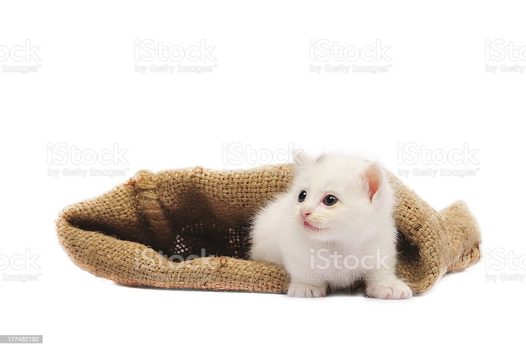 white cat royalty-free stock photo
