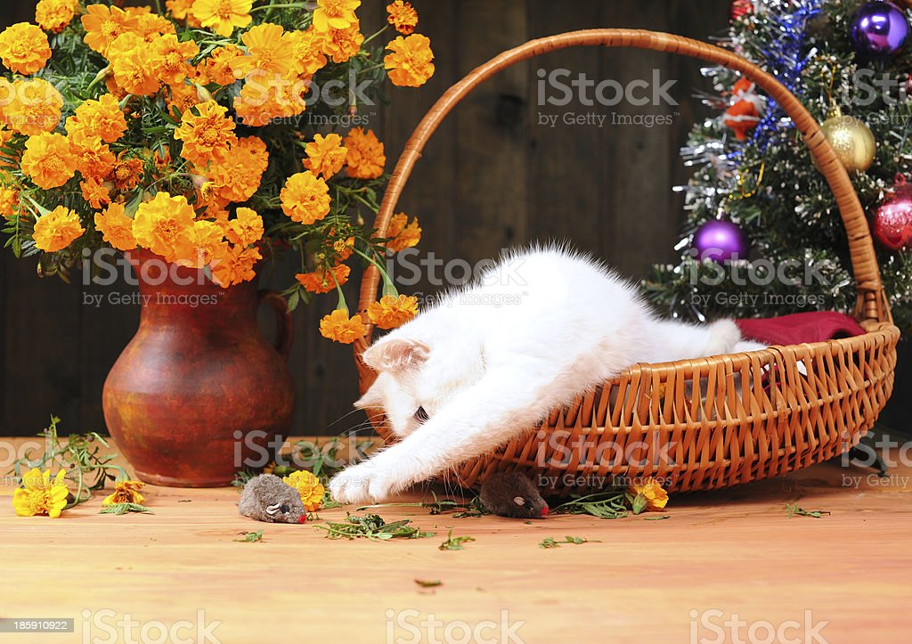White cat playing royalty-free stock photo