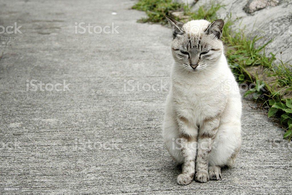 Siéntese aún gato blanco foto de stock libre de derechos