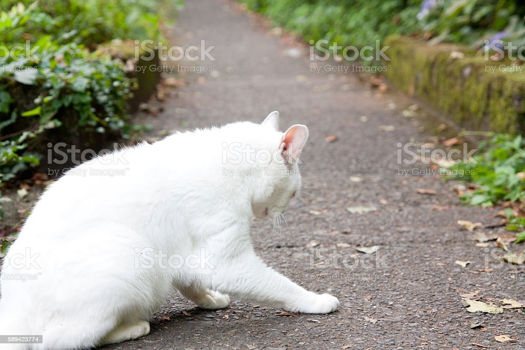 White cat who met in nature stock photo
