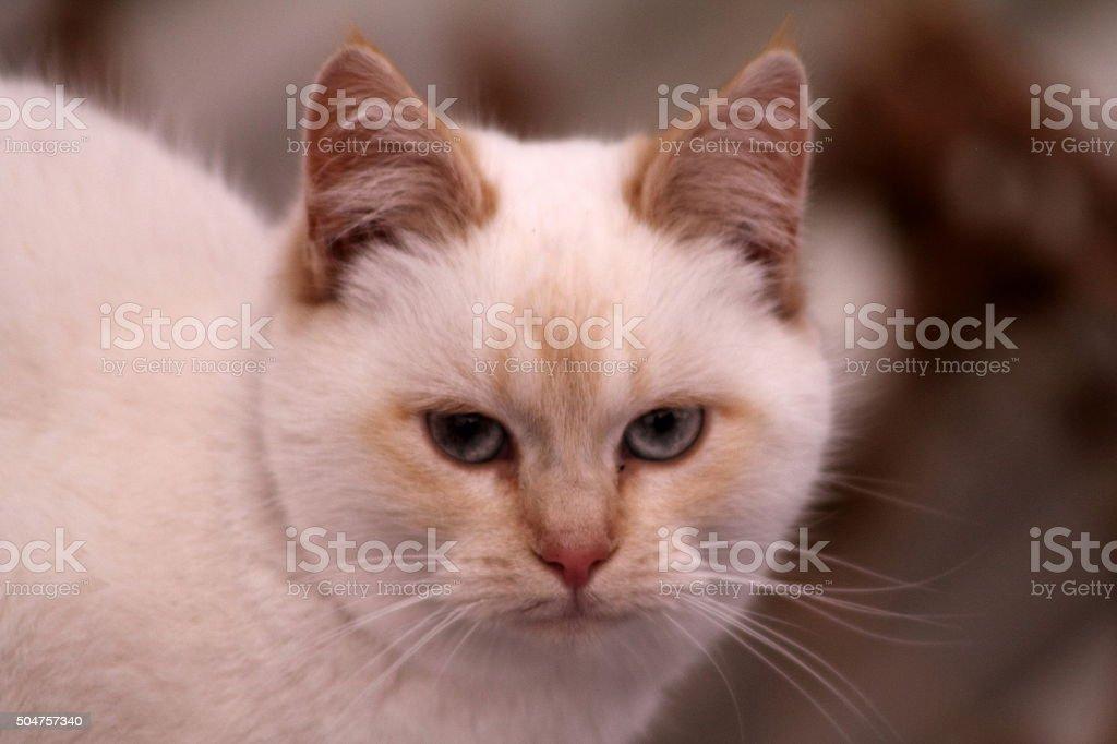 White cat's face stock photo