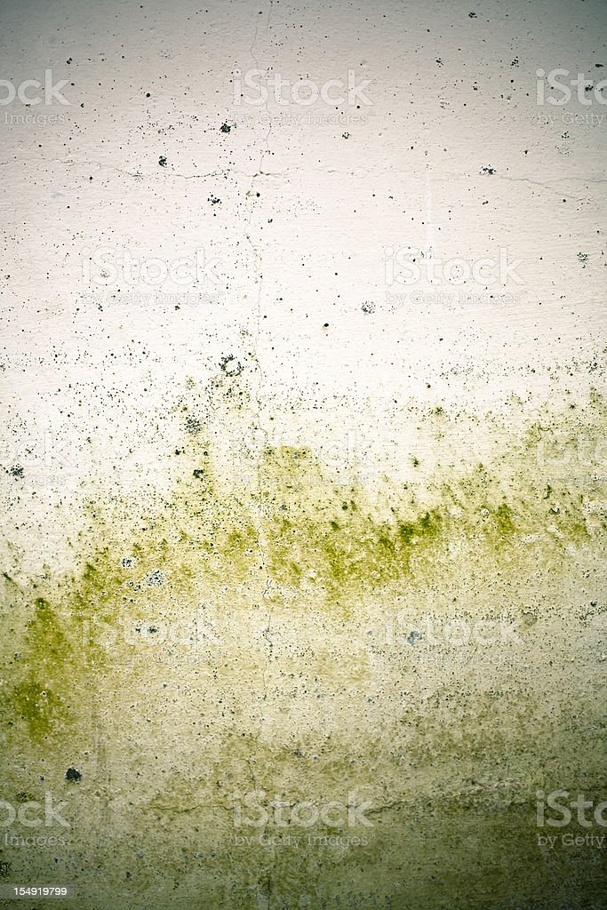 White cement wall Rusty and Mold stock photo