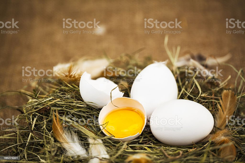 White Chicken eggs stock photo