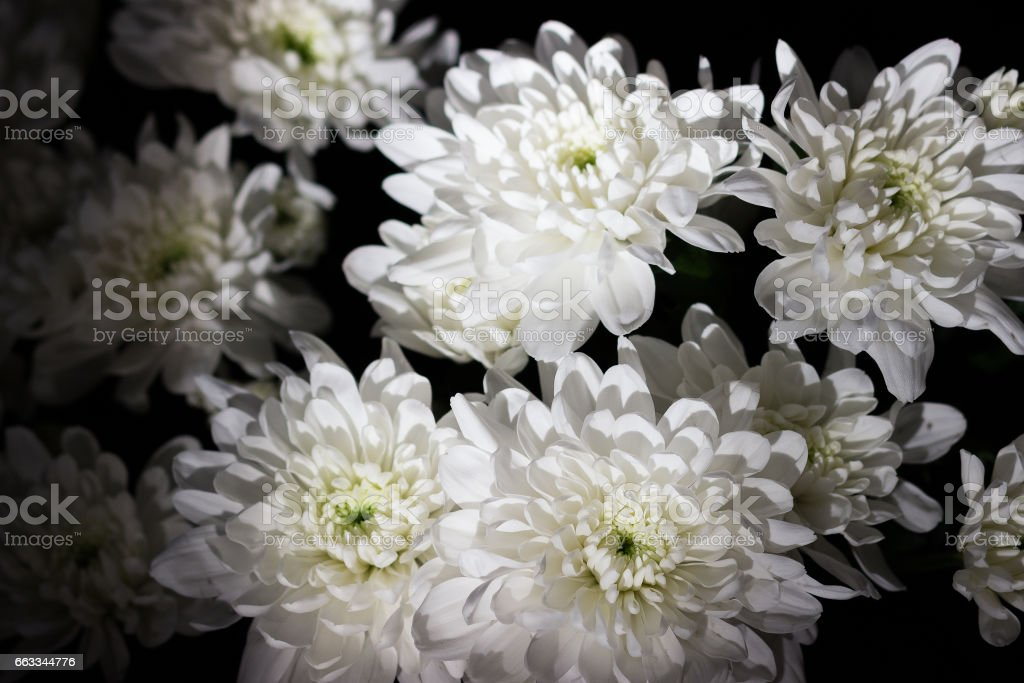 White chrysanthemum bouquet on a black background stock photo