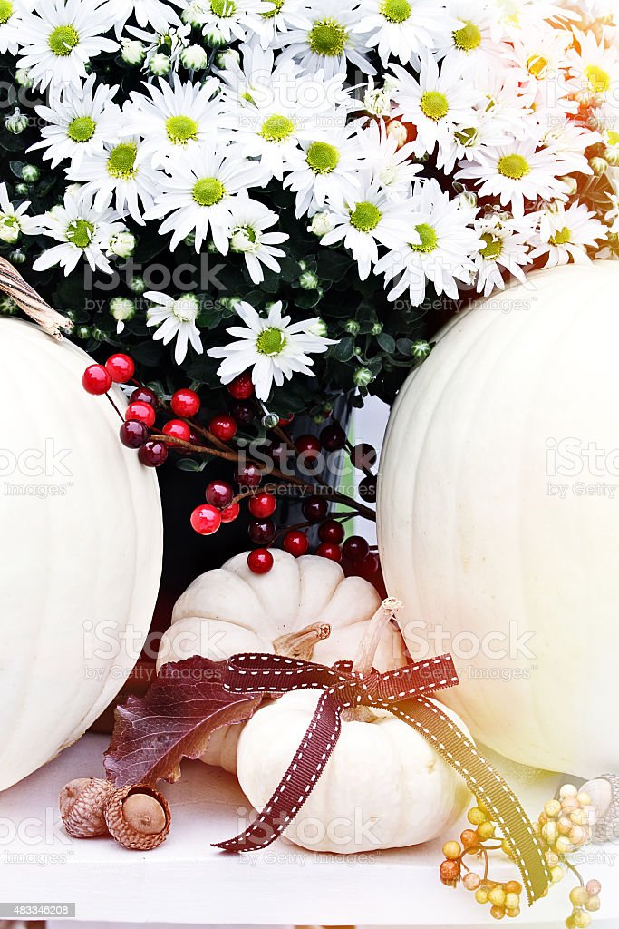 White Chrysanthemums and Pumpkins stock photo