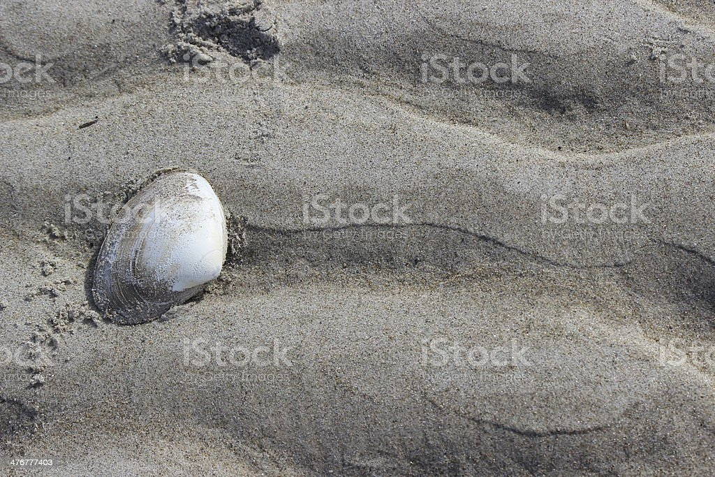 White Clam Shell on the Sand stock photo