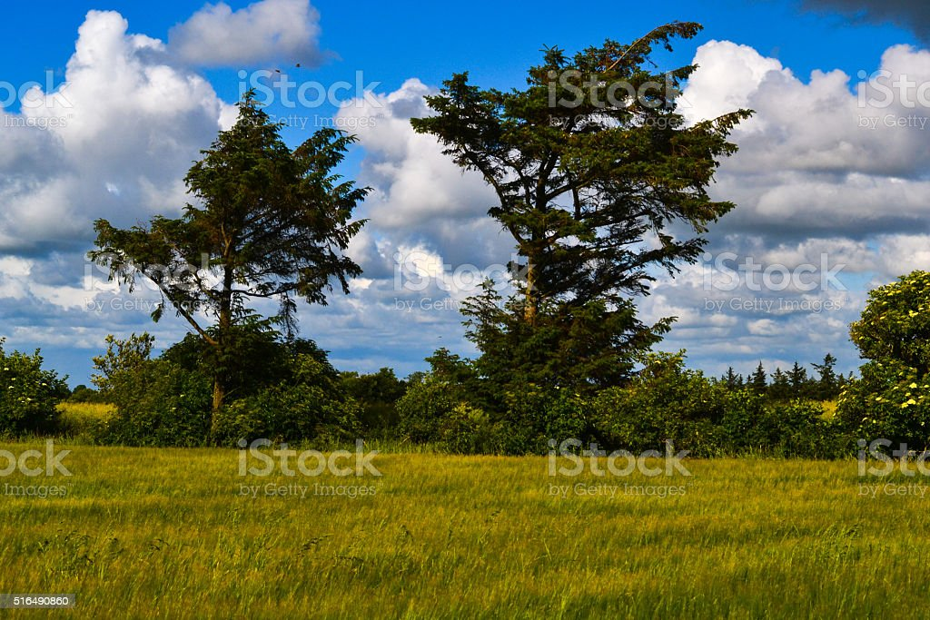 White clouds in Denmark field, soft focus stock photo