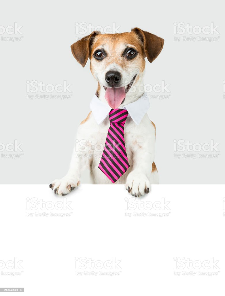 white collar worker dog stock photo