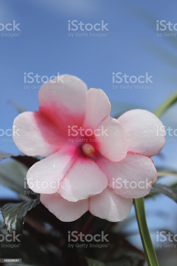 White Color Flower royalty-free stock photo