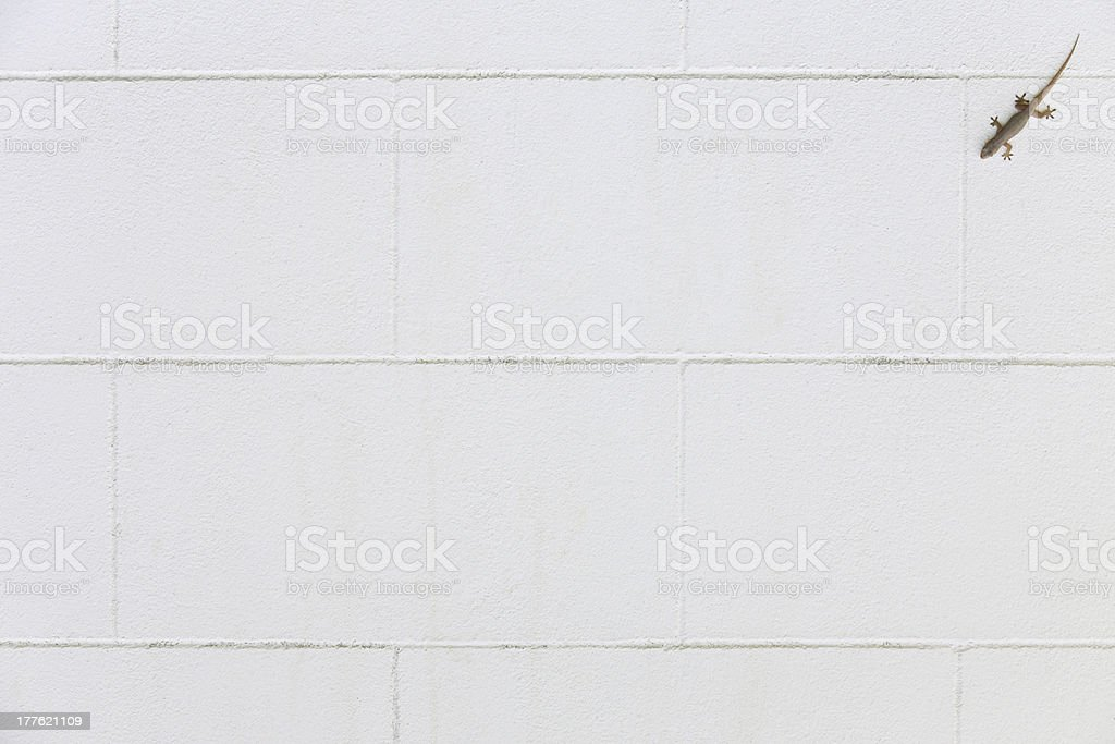 White concrete wall with lizard royalty-free stock photo