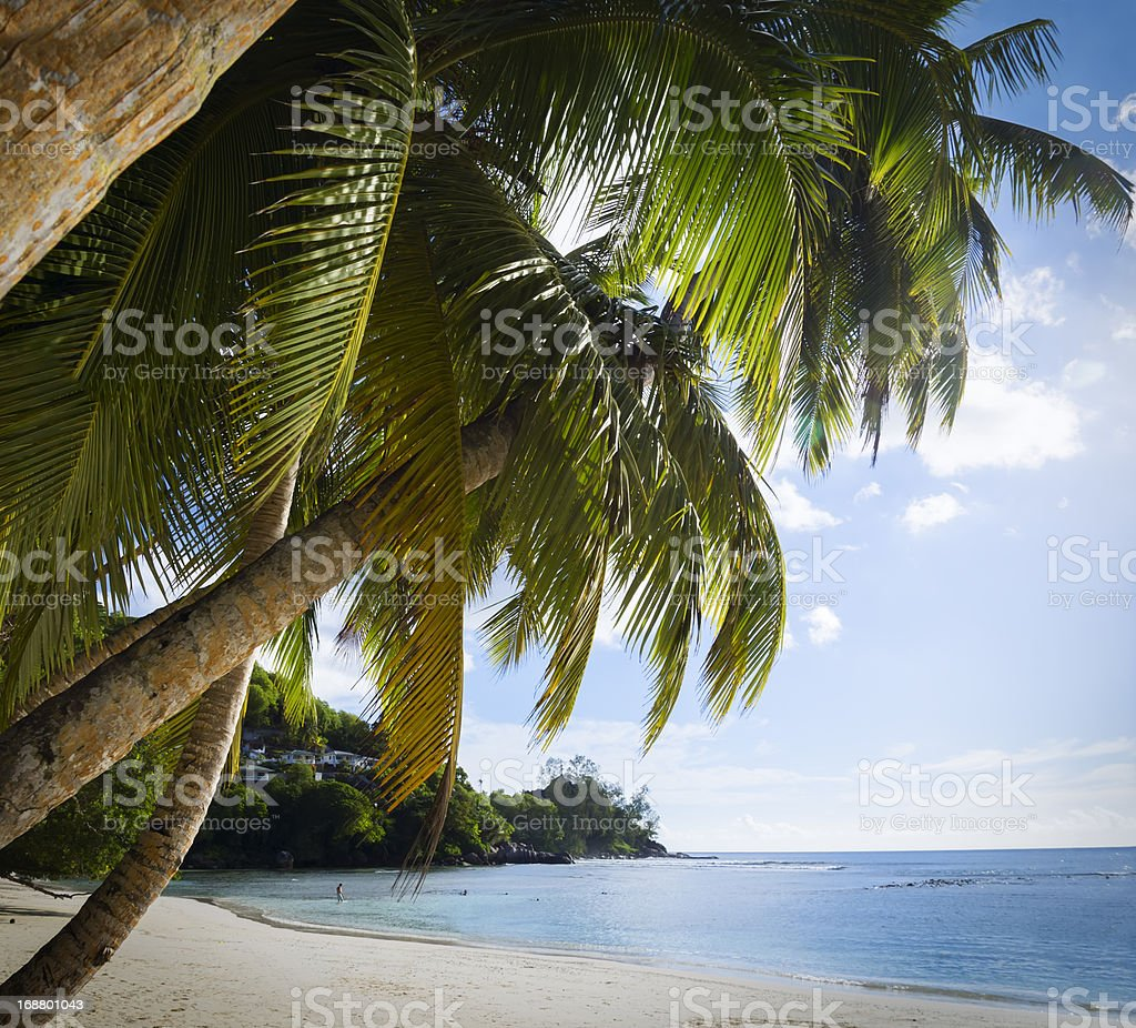 White coral beach sand and azure indian ocean. royalty-free stock photo