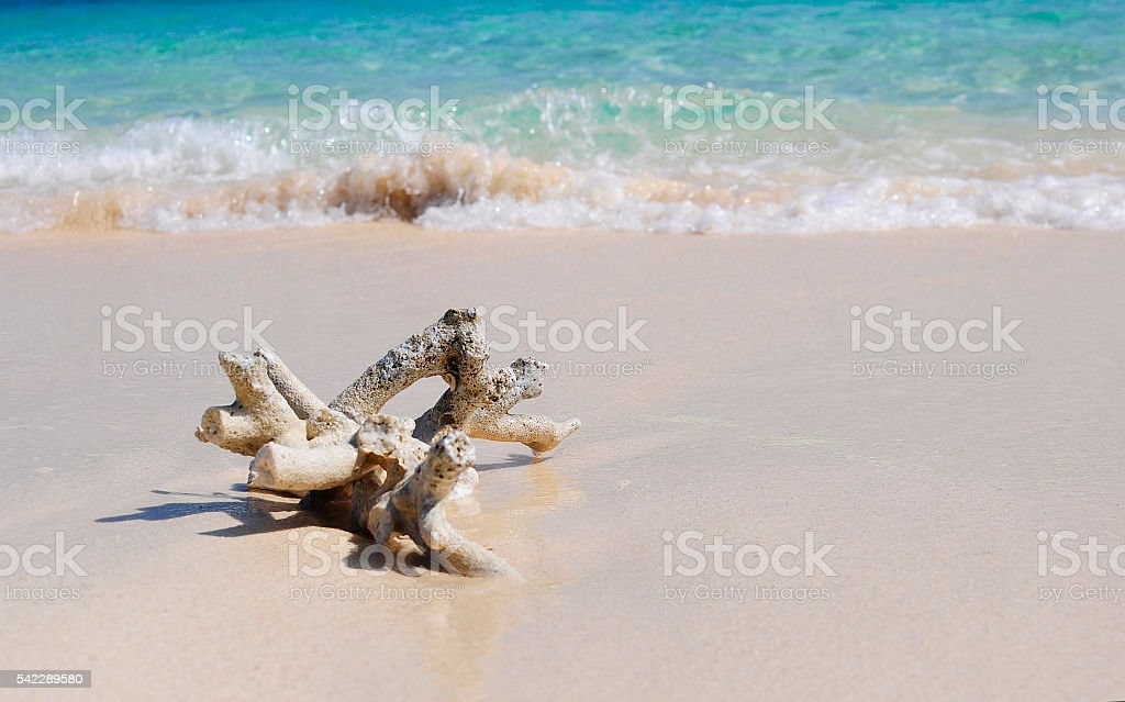 White coral branch stock photo