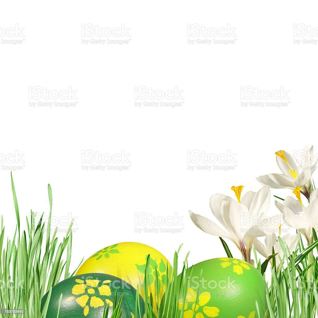 white crocuses in the grass royalty-free stock photo