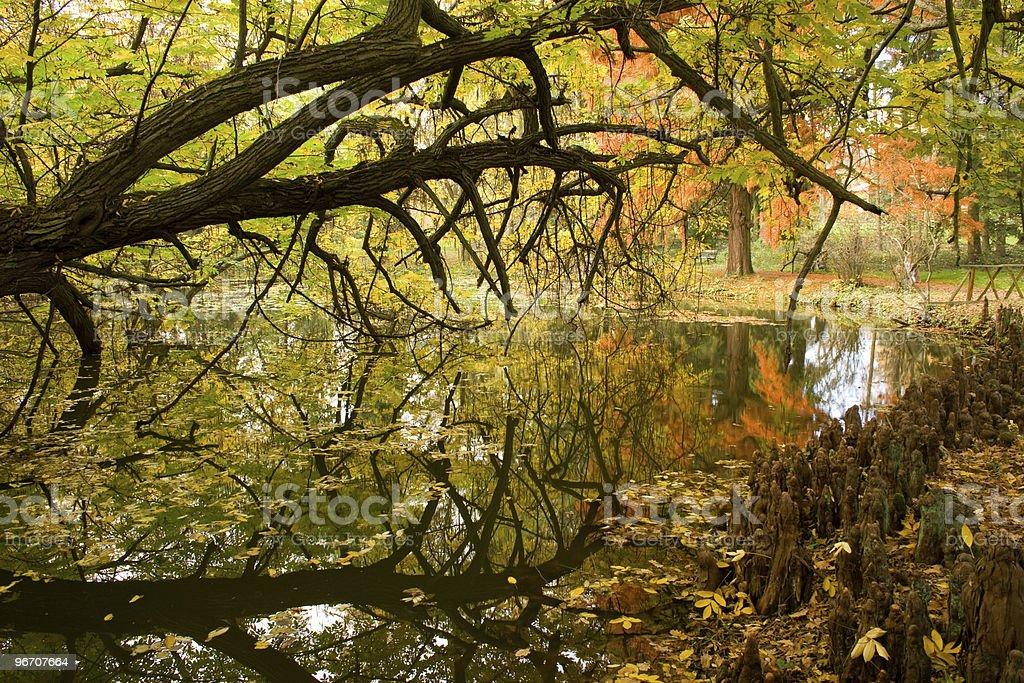 white cypress stock photo