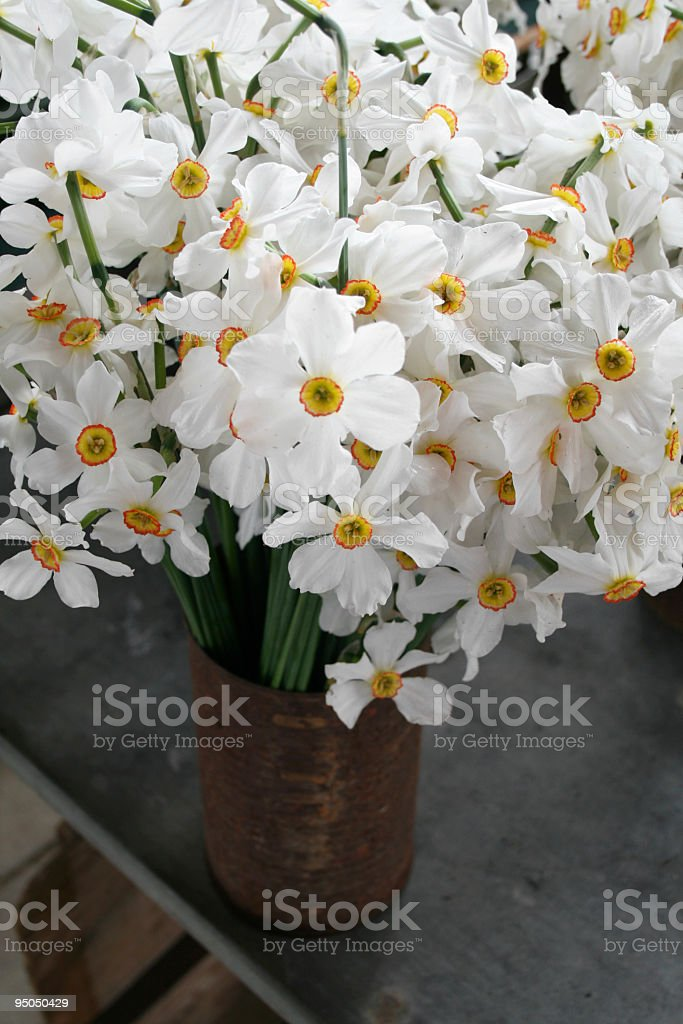 white daffodils royalty-free stock photo
