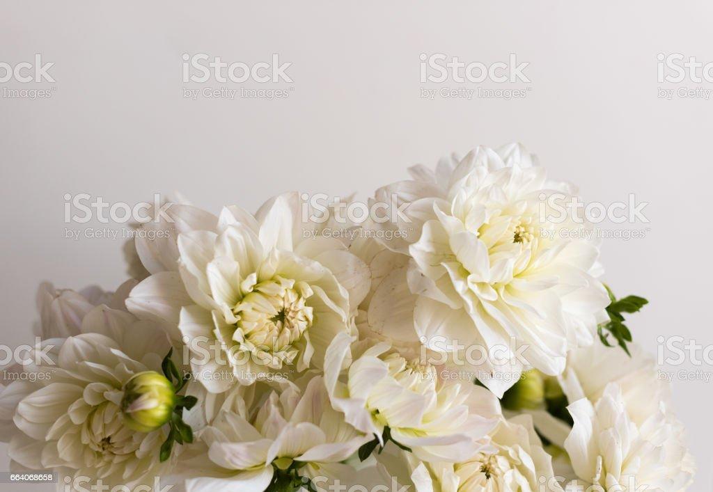 White dahlias from above stock photo