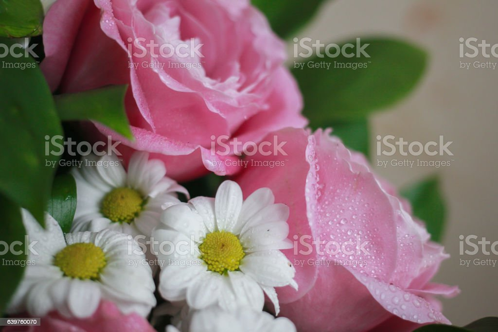 White daisies and pink roses on beige background stock photo