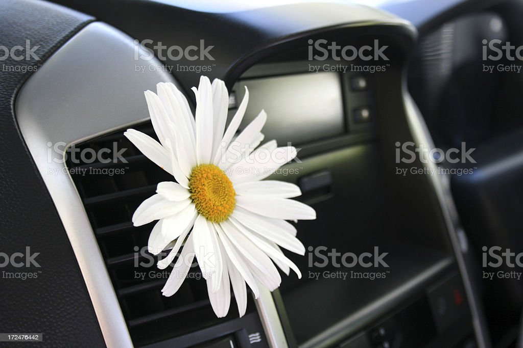 White Daisy in car air conditioning stock photo