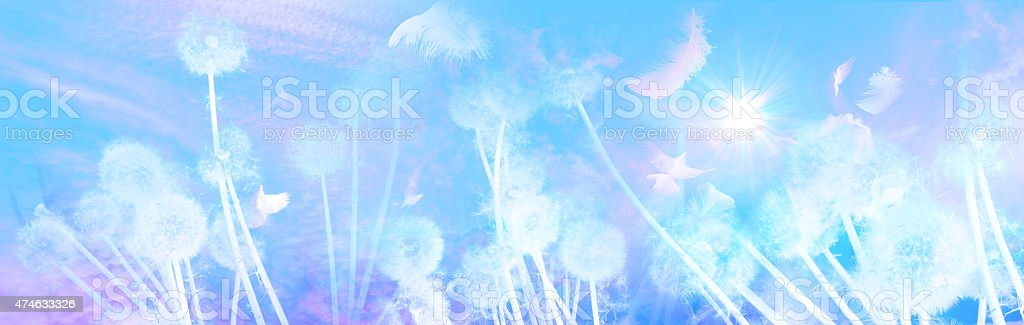 White Dandelions Sunrise with Feathers stock photo