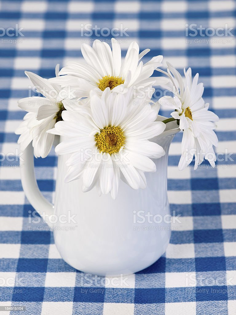 White daysies in the pot stock photo