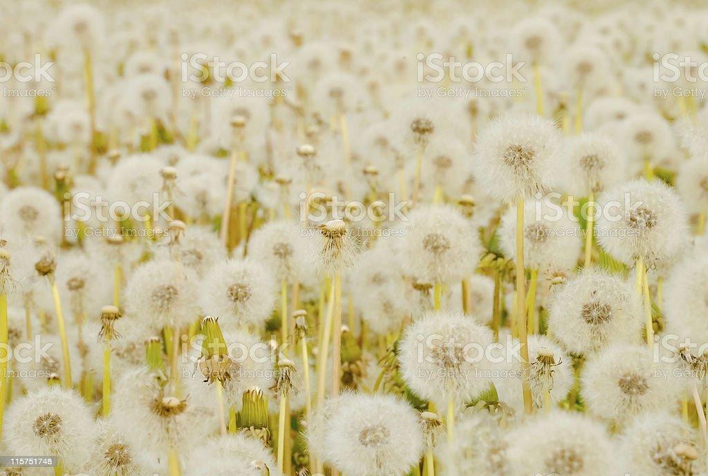 Weiße zarte am Rand Feld Hintergrund Lizenzfreies stock-foto