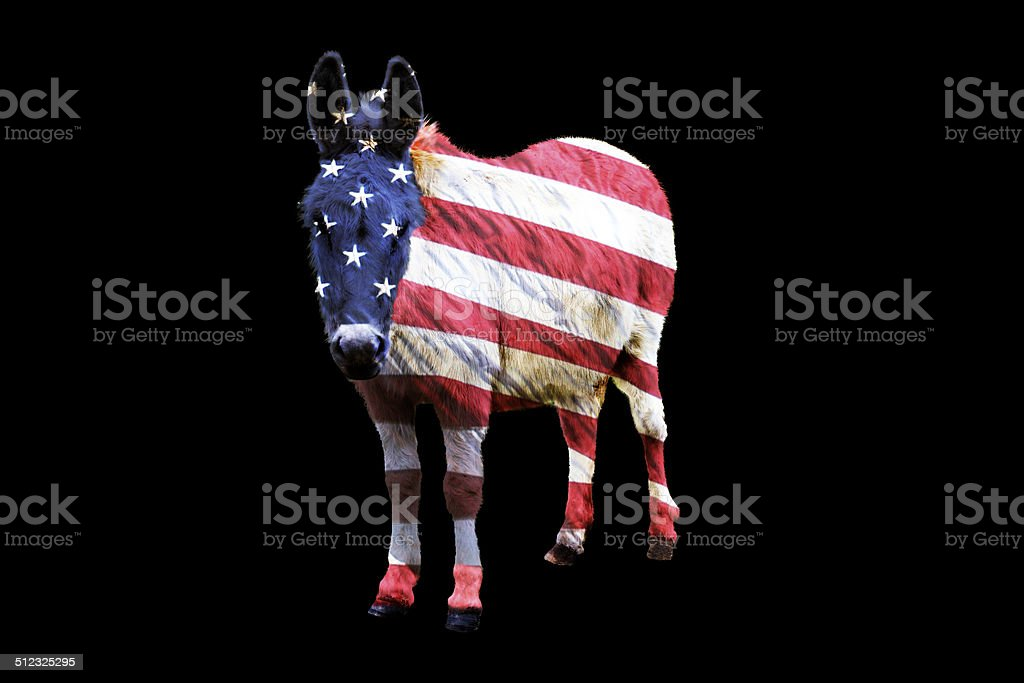 White donkey, Equus africanus asinus, with American flag overlay stock photo