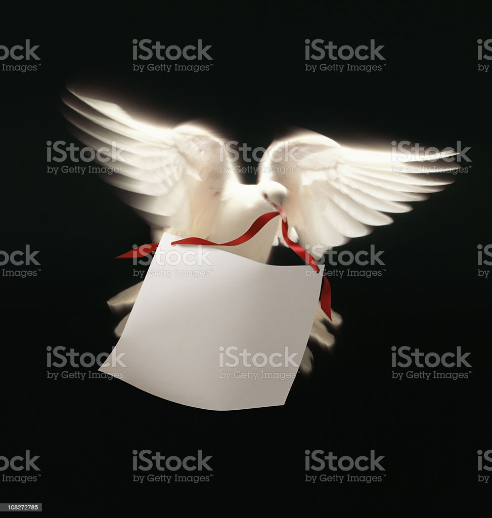 White Dove  Carrying Message stock photo