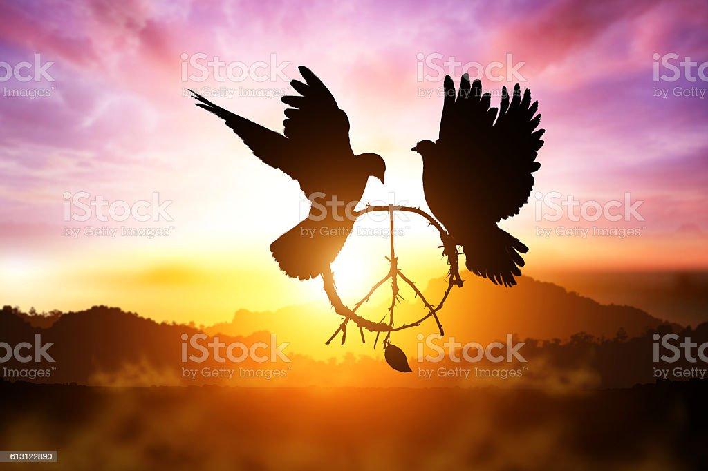 white Dove fly on pastel vintage background stock photo
