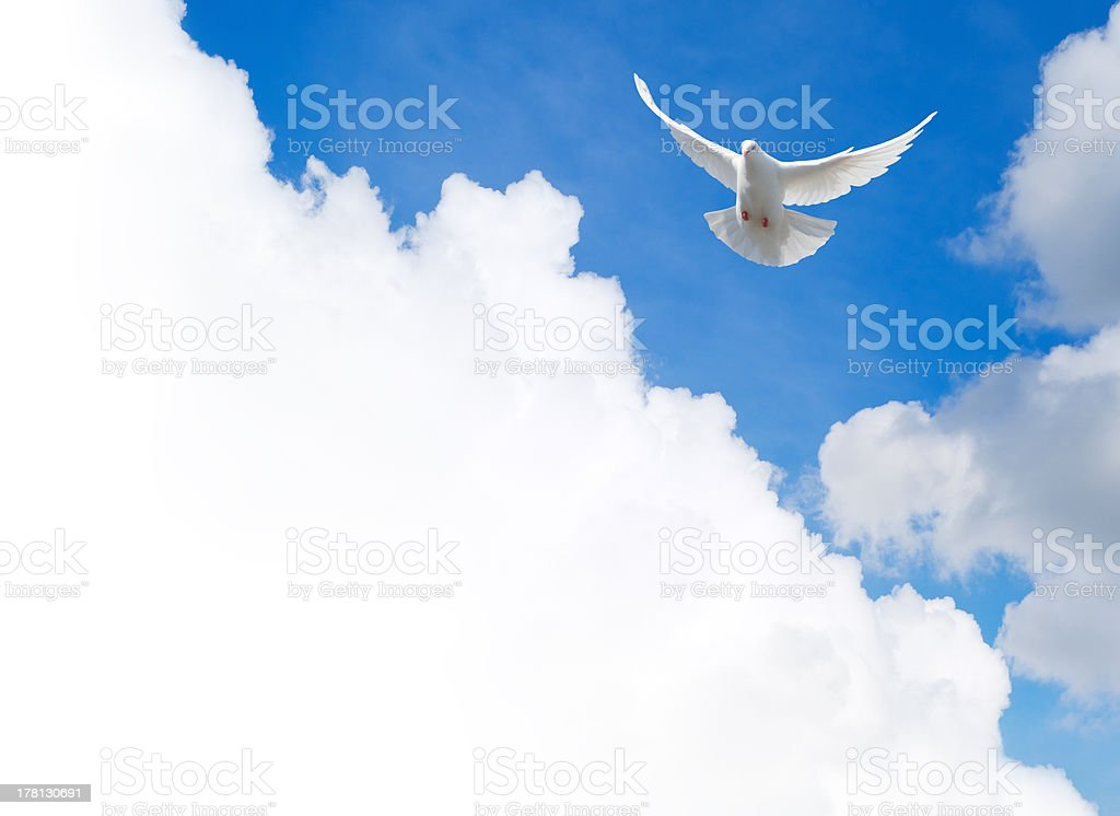 White dove flying in the sky royalty-free stock photo