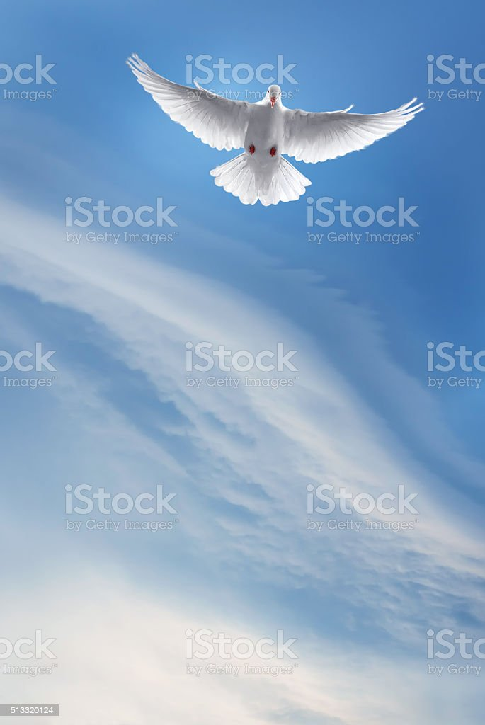 White dove in a blue sky, symbol of faith stock photo