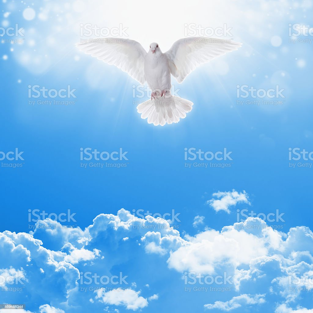 White dove in skies stock photo