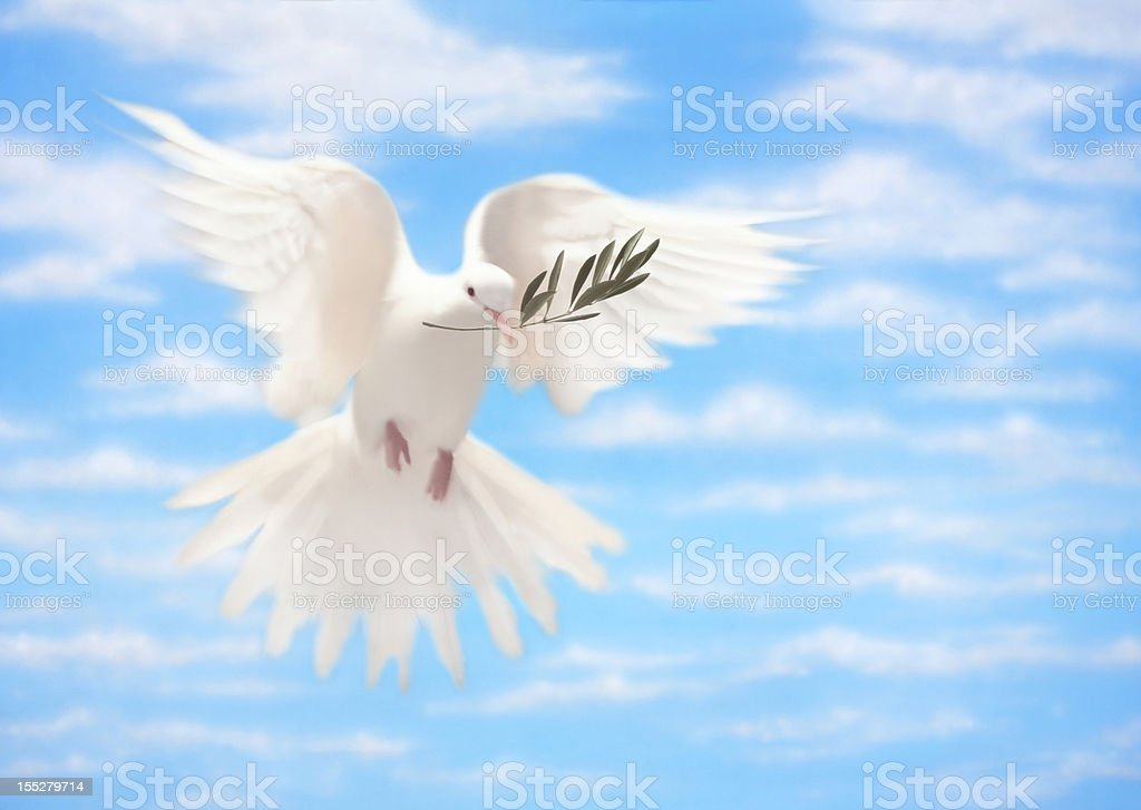 White Dove of Peace With Olive Branch stock photo
